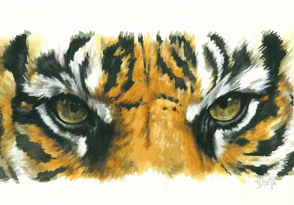 eye-catching-sumatran-tiger-barbara-keith